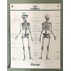 affiche anatomie par les Jolies Planches