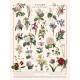 Affiche Fleurs par les Jolies Planches