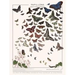 Affiche Papillons par les Jolies Planches
